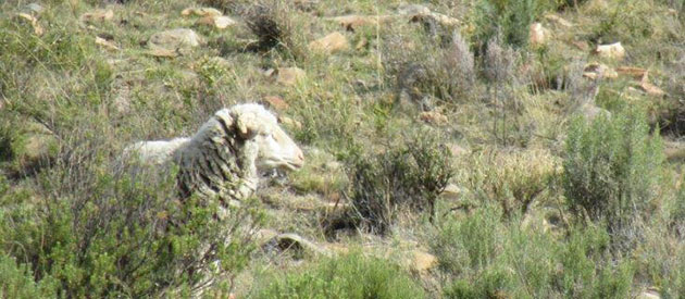Mountain Zebra Camdeboo Protected Environment, sanparks, www.eastern-cape-info.co.za